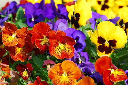 Photo via FlowerInfo