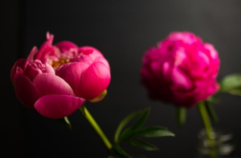 Mission de Flores - San Francisco Flower Shop | Pink Peonies