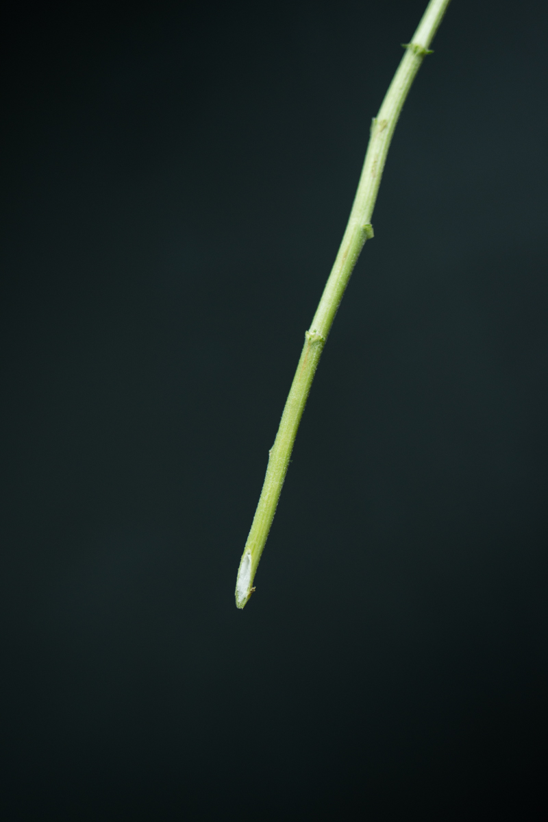 flower stem cut at an angle