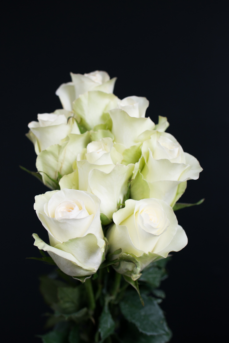 Mission de Flores Blog: Flowers To Give For Sympathy - White Roses