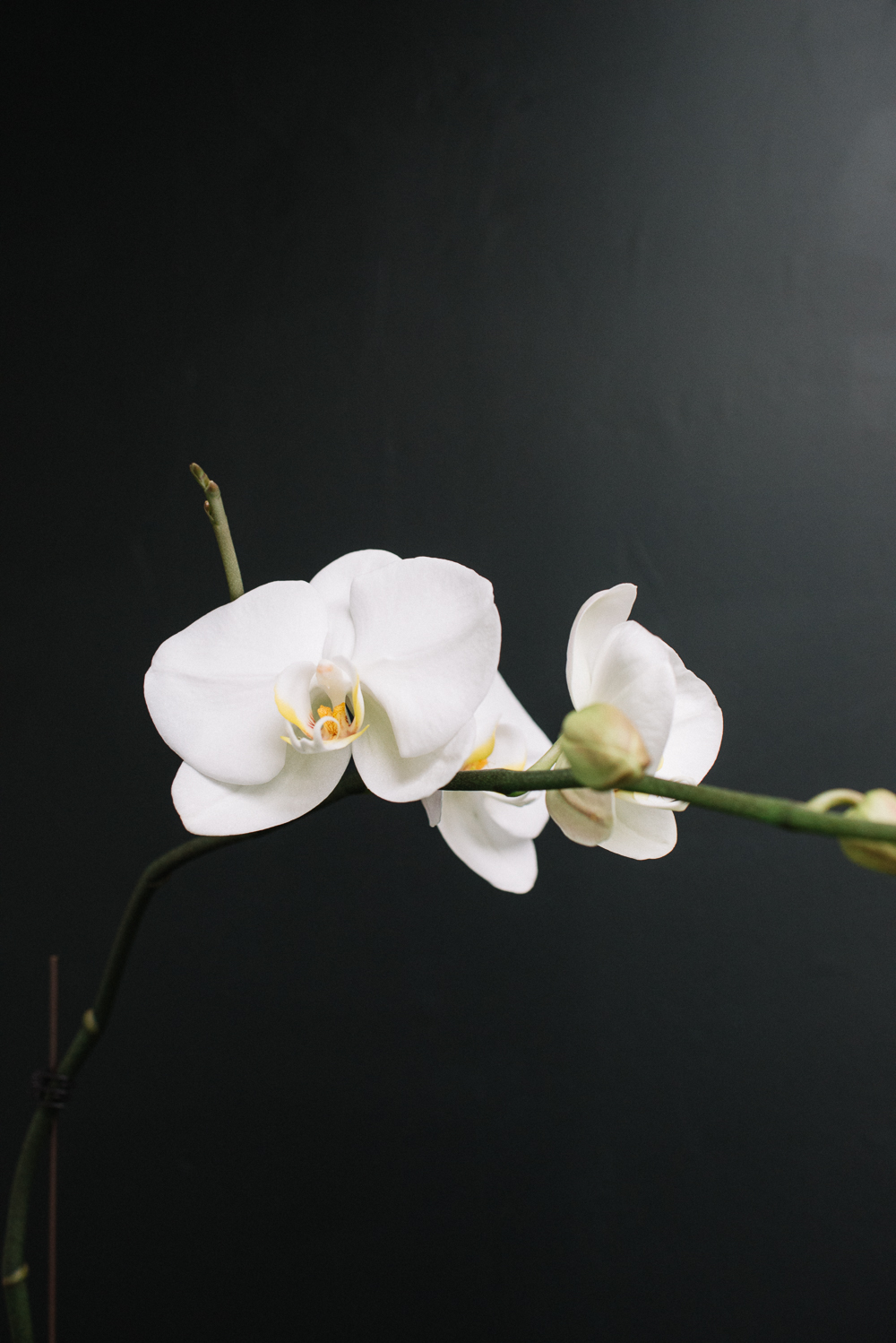 Mission de Flores Blog: Flowers To Give For Sympathy - White Orchids