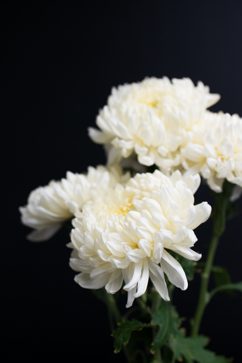 Mission de Flores Blog: Flowers To Give For Sympathy - football chrysanthemums