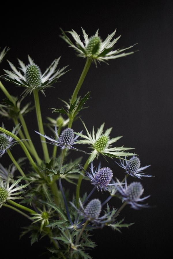 thistle flower.jpg