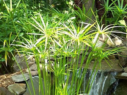 Photo via Your Garden Ponds Center