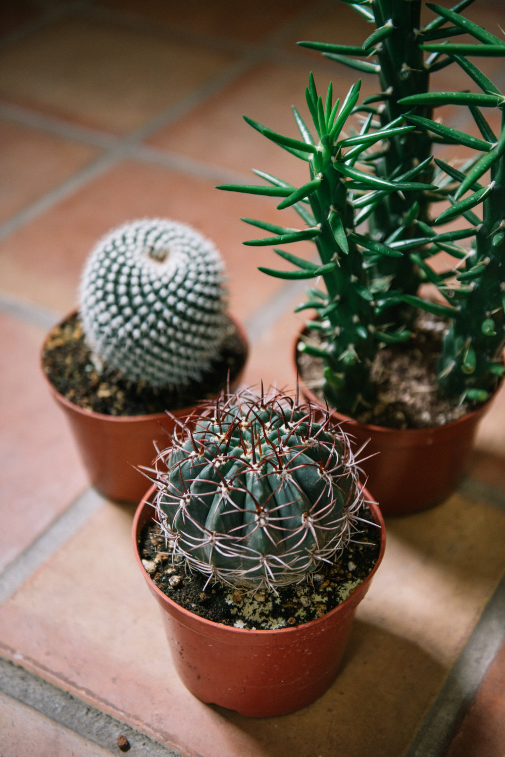 Mission de Flores | Plant Cactus Shop San Francisco