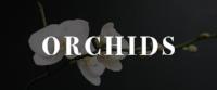 Mission de Flores - Orchids