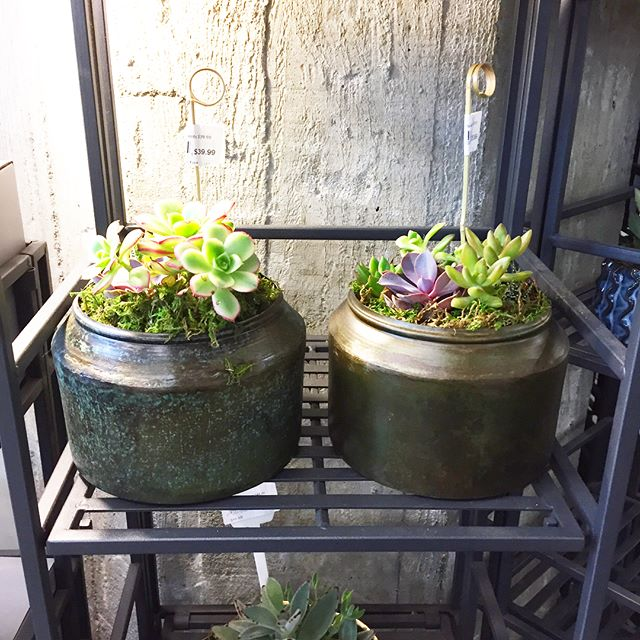 The Market at Twitter in SF is stocked up with new succulent gardens! Pick one up for your desk or as a gift. @visitthemarket . . . . #themarket #visitthemarket #succulentgarden #missiondelores #sf #sfmission #Sfmissiondistrict #missiondistrict #succulovers #succulentsofinstagram #succulents #succulentlove #sfflowers #sfflorist #sfflowershop