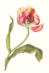 Botanical Julia.jpg