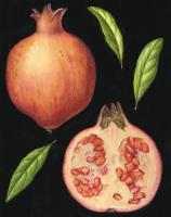 botanical fruit and veg 2.jpg