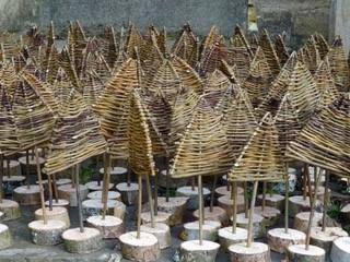 willow christmas trees.jpg