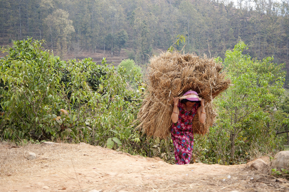 Woman in rural Nepal with a bale of hay