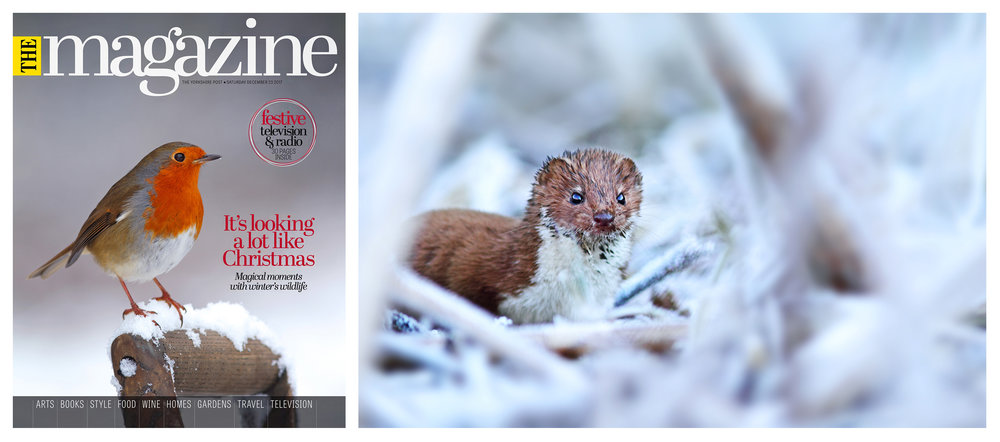 Simon Roy, Yorkshire, York, British, UK, wildlife photographer