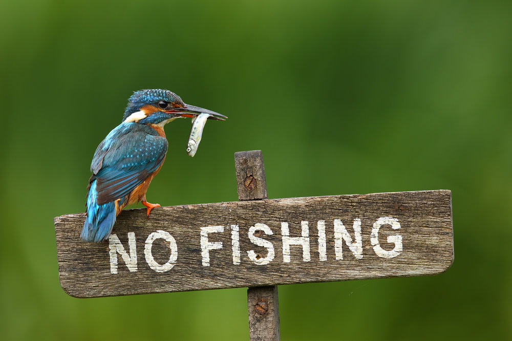 No_Fishing.jpg