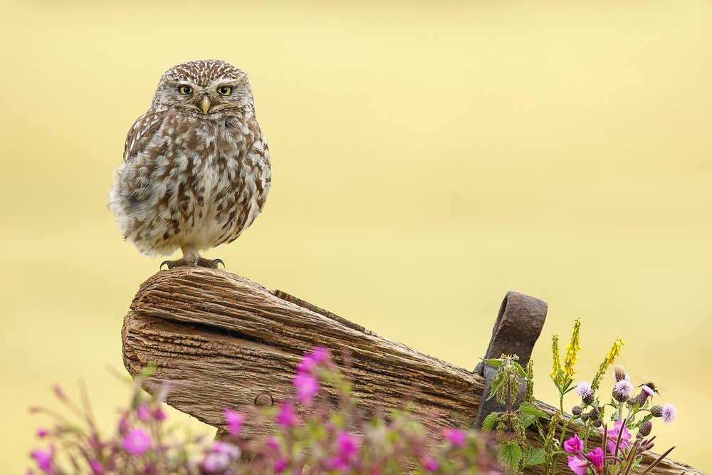 The Owl and the Bee.jpg