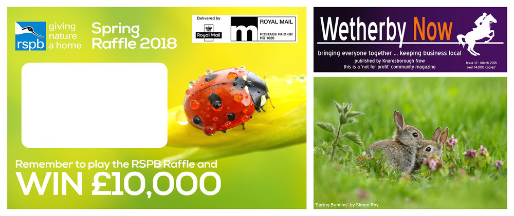 Simon Roy, Yorkshire, York, Wetherby, British, UK, wildlife photographer, RSPB, bunnies, ladybird, spring