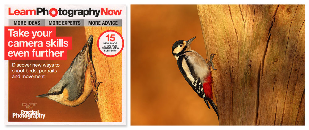 Simon Roy, Yorkshire, York, Wetherby, British, UK, wildlife photographer, RSPB, nuthatch, dvd, woodpecker, spring