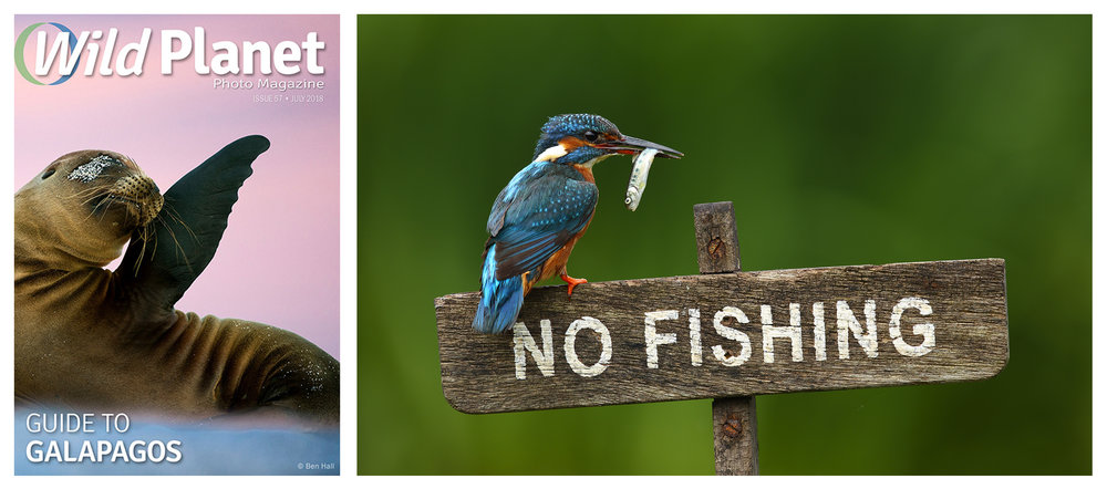 wild, planet, photo, magazine, simon, roy, kingfisher, photographer, Yorkshire, uk