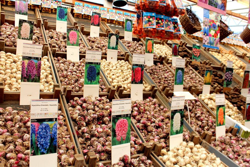 flowermarket in amsterdam