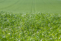 Harvest Haylage