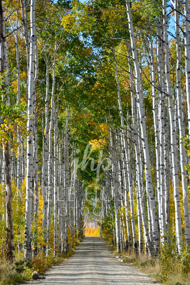 Aspen-Alley-Battle-Pss-WY-DSC_6415.jpg