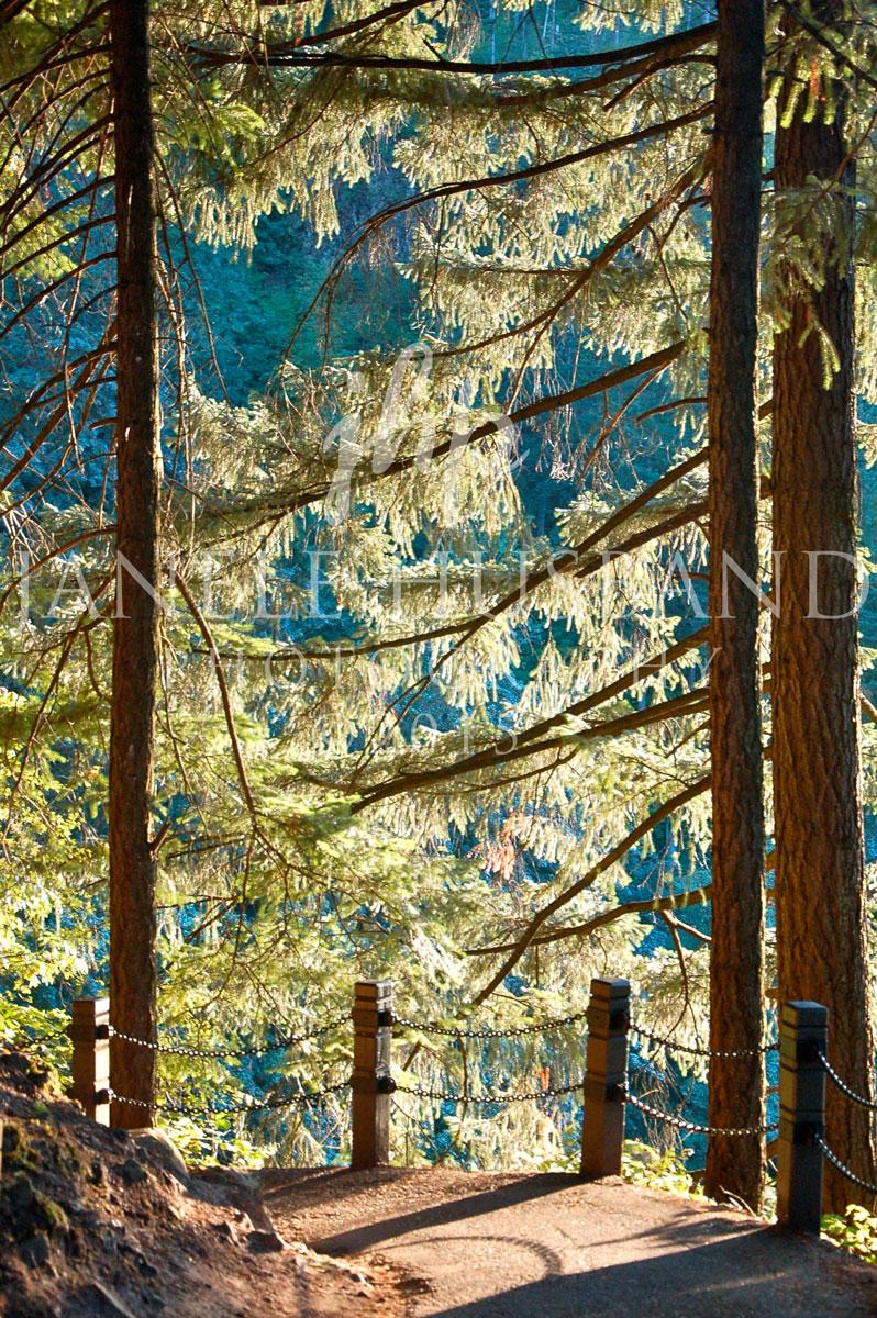Multnomah-Falls-Trail-DSC_0124.jpg