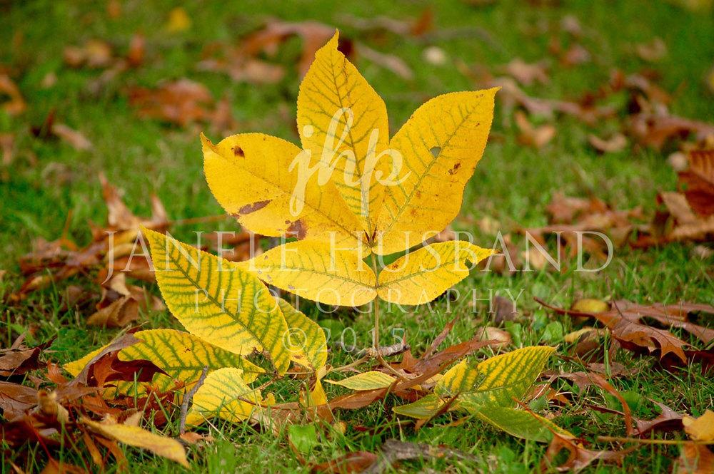 Ash-Leaves-10.18.08-DSC_0056.jpg
