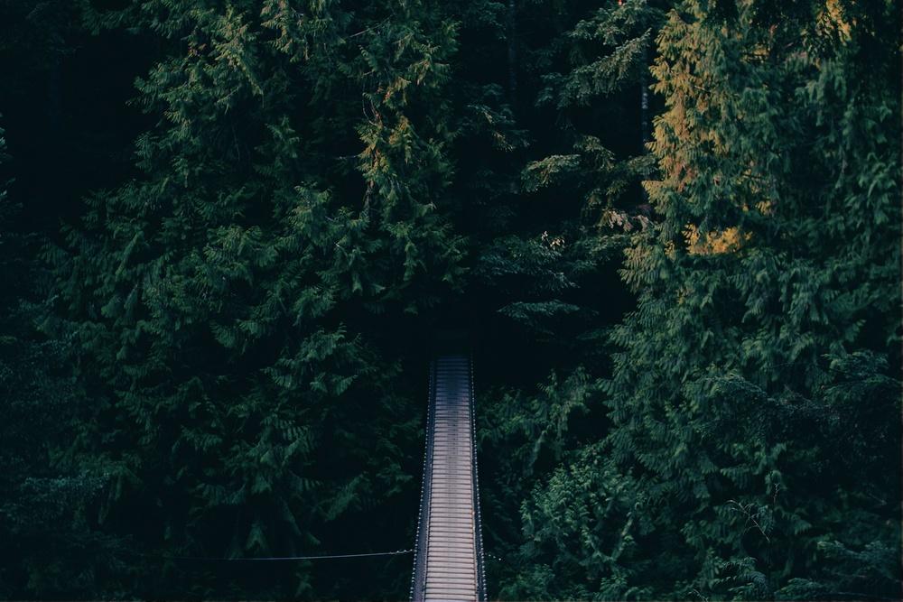 bridge_trees.jpeg