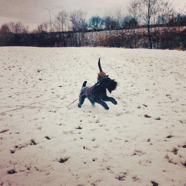 TGIF! Our favorite snow bunny frolics in the snow. Happy Finian Friday!