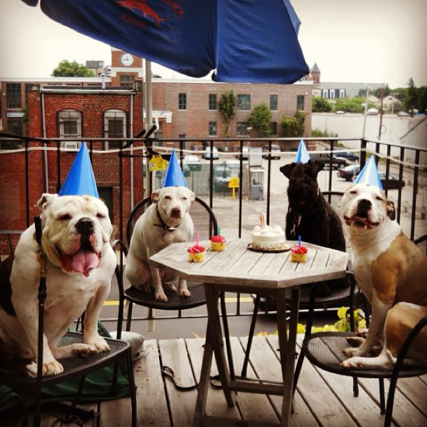 #tbt Finian's first birthday party!