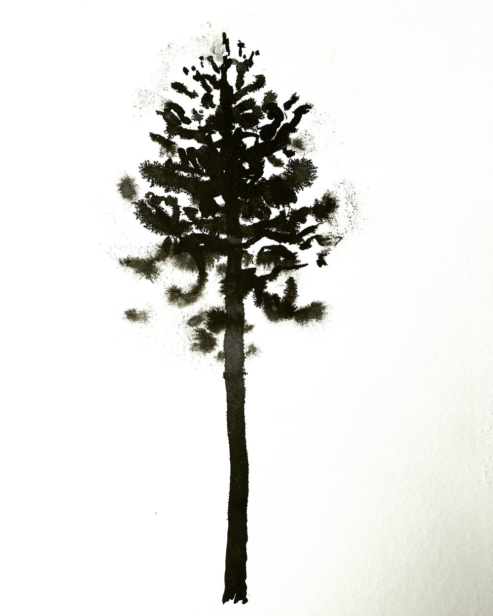Tree study I did in the wilderness.
