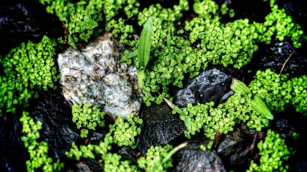 Lichen, Glen Ridge, NJ 2014-05-15.jpg