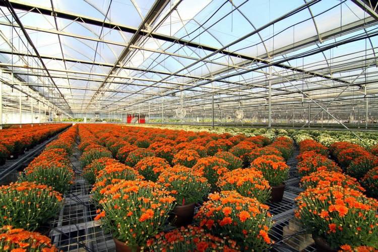 serres-fleurs-oranges.jpg