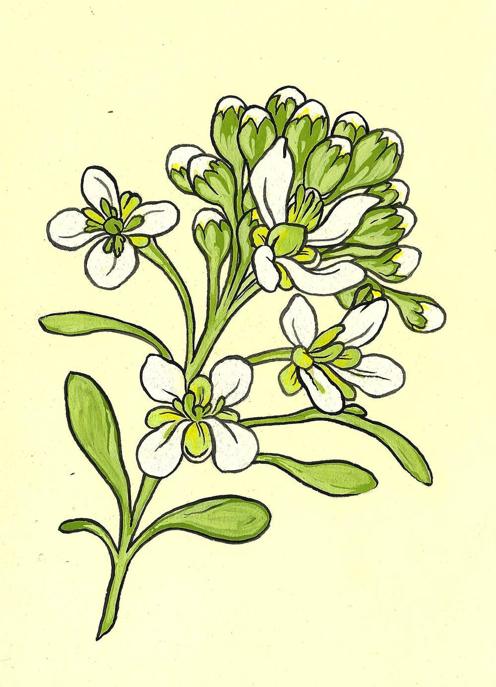 botanical3.jpeg