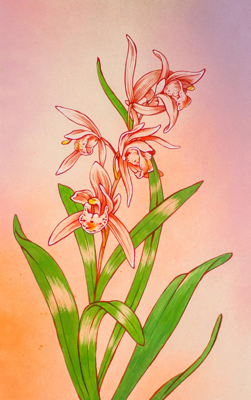nobleorchid.jpg