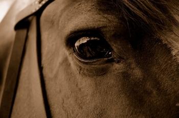 wild_horses_part_ii.jpg