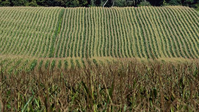 farmer-880567_640.jpg