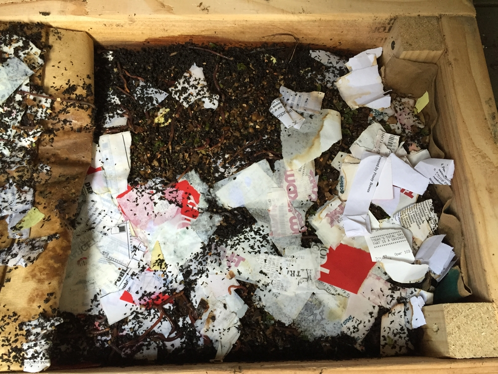 What the compost bin looks like a few months into the process.  Note the receipts and paper slowly getting eaten.