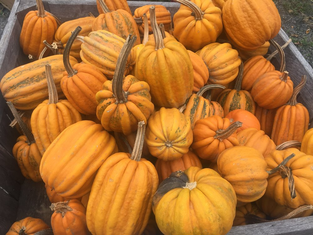 Lots of different pumpkins and squash at Vinnie's Farm Market.  It's Cash Only there so bring some bills.