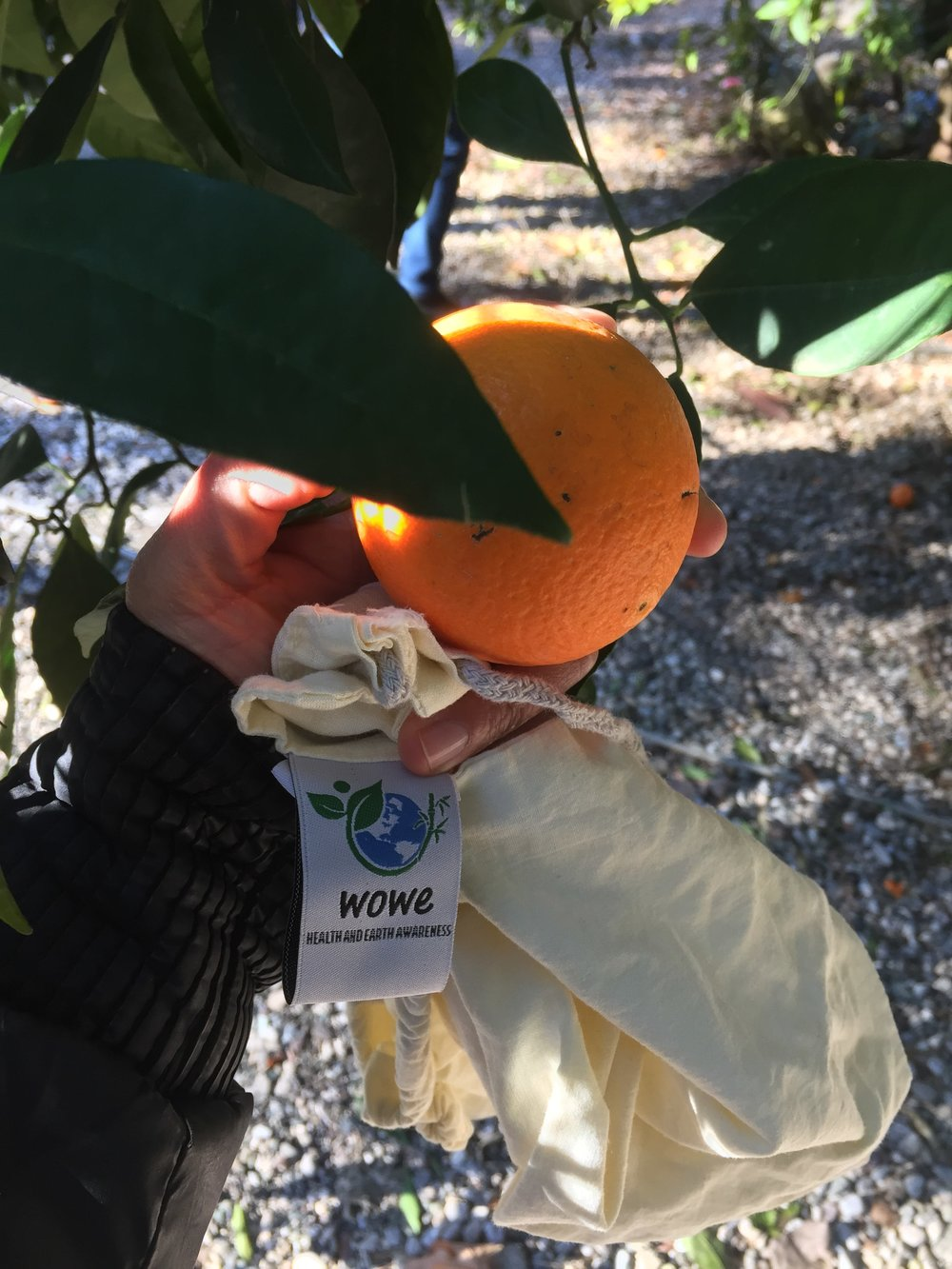 My WowE bags came in handy when we happened by an orange tree and were able to pick up from fresh oranges and mandarins in the South of Turkey.