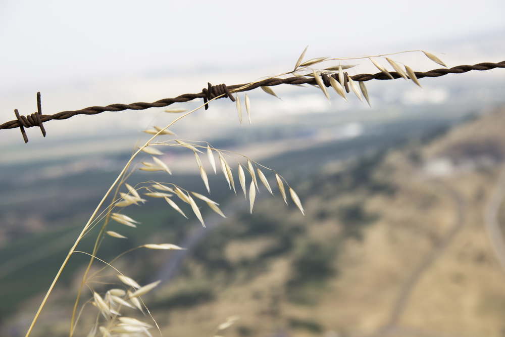 israel1-80.jpg