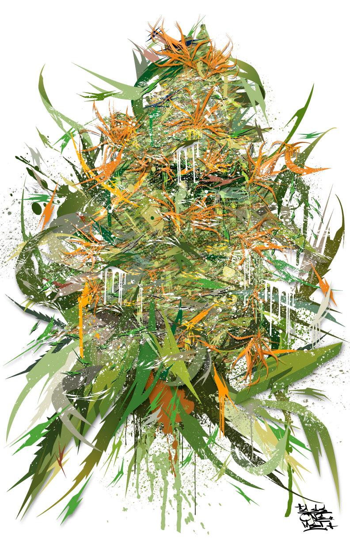 White Widow Plant
