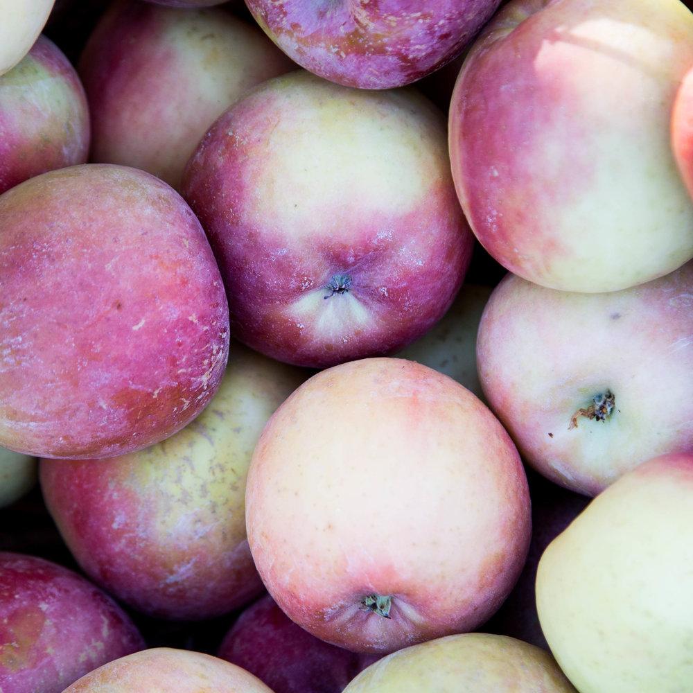 apples 3-1.jpg