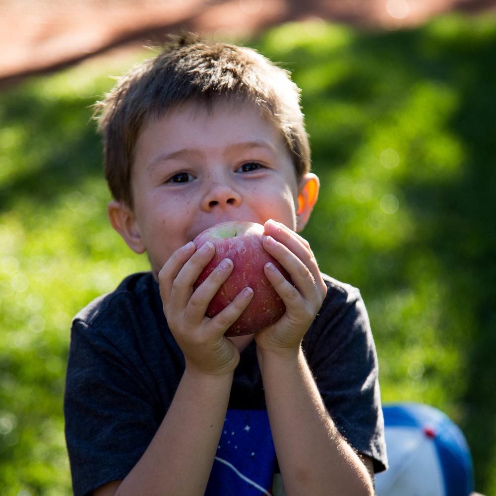 apples 16-1.jpg