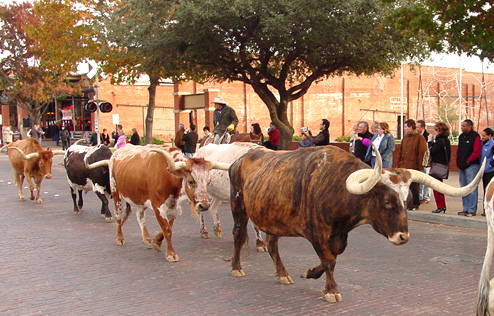 Burns-Ft-Worth-Dec-2005-longhorns-parade_72.jpg