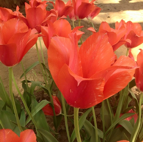 Coll Japan red flowers