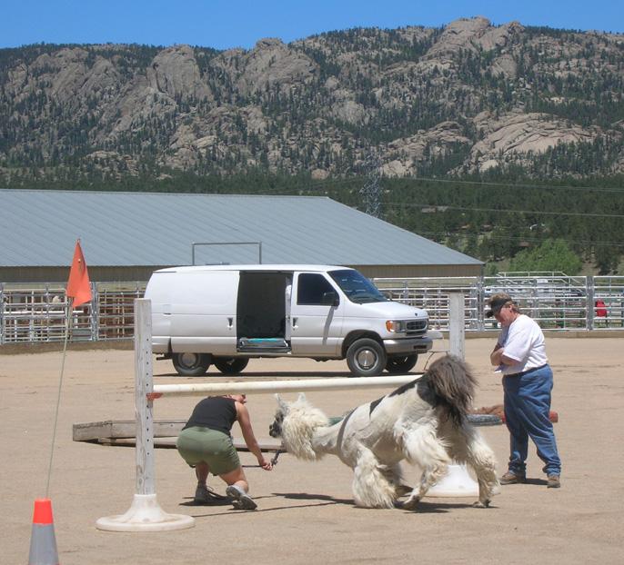 Estes Park 08 June 6103 lamas 2_96.jpg