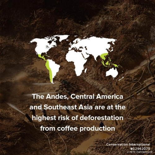 Deforestation_Results of in Central and S America and Southeast Asia.jpg