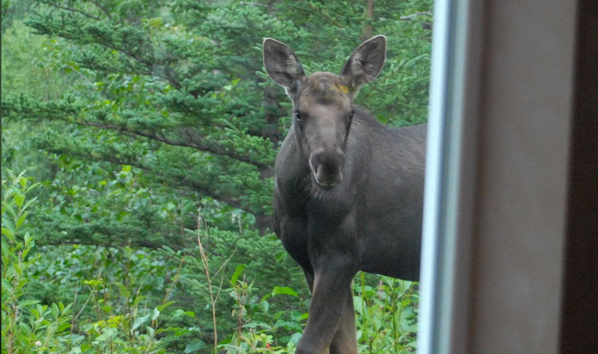 Wildlife Viewing Right out the Back Door!