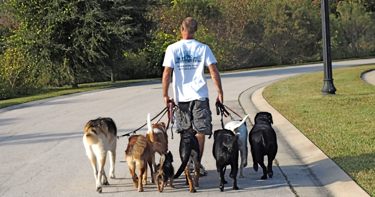 todd langston u0027s pack life k 9 behavior solutions