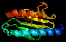 230px-Protein_FXN_PDB_1ekg.png